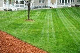 Lawn Company