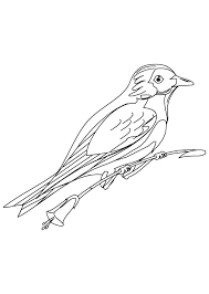 Bluebird Coloring Page Betterfor