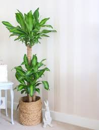Marvelous Brown Tall Plant Pot ...