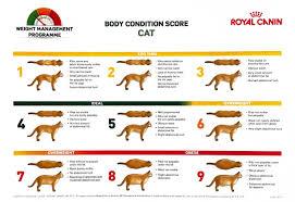 Cat Bmi Chart Weight Advice Bilton Veterinary Centre