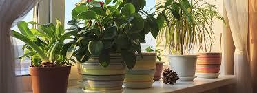 Plant Interior Design Cool Design