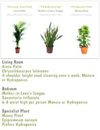 indoor plants names and pictures name of house green with in tamil house plants names common types of