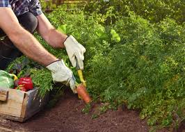 eat healthy with a low cost budget through vegetable gardening