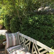 great hedge and screen plants for privacy
