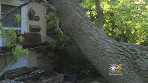 Huge Tree Falls, Damages House In Oak Lawn - YouTube