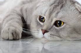 4618x3059 px, animals, cats, glance ...