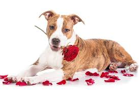 poisonous plants and flowers for dogs