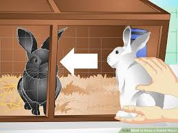 image titled keep a rabbit warm step 7