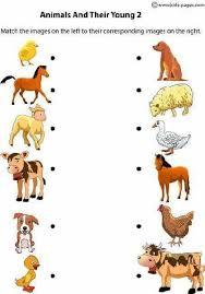Descriptive Essay Food Animals Used For Food Essay Essay Sample 2333 Words