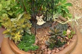 miniature succulent fairy gardens