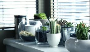 plants for office space. fine office decorative plants for office desk plant diy decor simple budget  friendly space st louis throughout