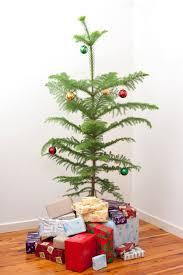 Potted Christmas Trees Youu0027ll Love  WayfairChristmas Trees Small