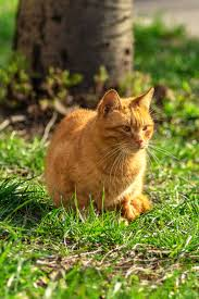 natural ways to keep cats out of your