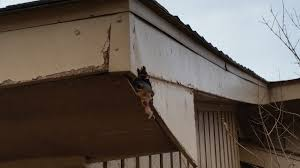 Image result for Leftover termites in your property