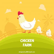 Chicken Vectors, Photos and PSD files   Free Download