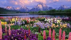 Beautiful spring nature desktop wallpaper. Spring Desktop Wallpapers Top Free Spring Desktop Backgrounds Wallpaperaccess