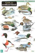 Bird Identification Chart Guide To Wetland Birds Identification Chart By Hulyer D