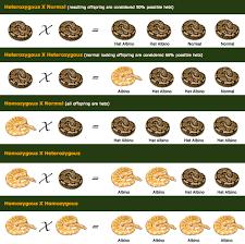Ball Python Morph Chart Image Result For Ball Python Morph Chart Breeding Danger