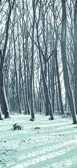 mx20-cold-winter-forest-snow-nature ...