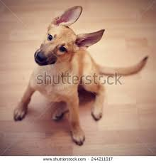 Small Picture Mongrel Puppy Stock Images Royalty Free Images Vectors