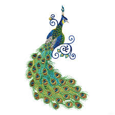 Indian Peacock Design Indian Peacock Clipart
