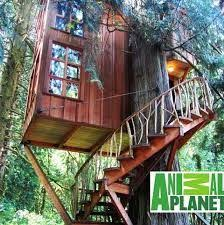 Treehouse Masters Pete nelson Tree Houses Pinterest Treehouse
