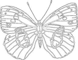 Bug Coloring Pages Printable Coloring Pages