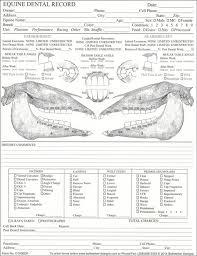 Equine Dental Chart