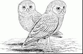 Small Picture unbelievable hard owl coloring pages printable with hard coloring