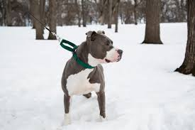 Image result for dog care collars
