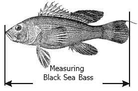 Crab Size Chart Nj Scottsbt Com Fishing Regulations