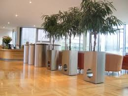 office plant displays. Contemporary Stainless Steel Plant Pot With Ficus Alii Office Displays S