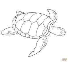 Small Picture Green Sea Turtle coloring page Free Printable Coloring Pages