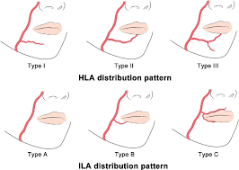 arteries of the face structure of inferior labial artery semantic scholar