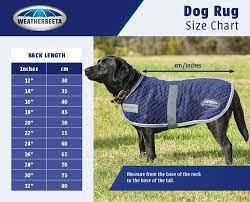Labrador Retriever Height Chart Dog Coat Buying Guide