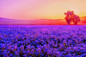 Purple Ocean Fields Nature Background Wallpapers On
