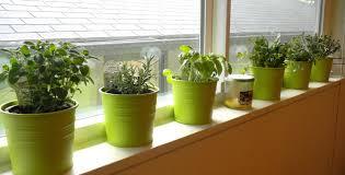 image of diy indoor herb planter