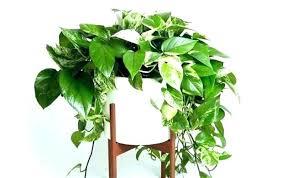 best indoor office plants. Unique Indoor Plants Interesting Cool Office  Best With .