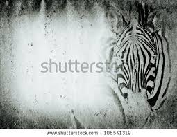 wild animal zebra old grunge paper stock illustration  wild animal zebra old grunge paper texture background