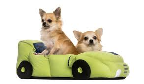 fancy dog beds furniture. The Lowdown On Dog Beds Including Super Cool Designs Usa Pet Cover Car. Paint Colors Fancy Furniture