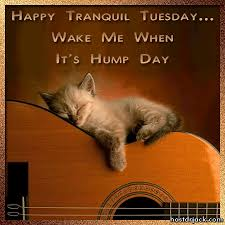 Image result for tuesday happy cat images