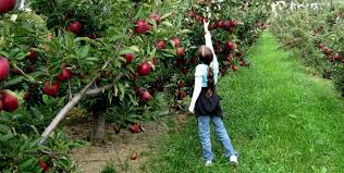 Fruit Trees Typically Do Well In IranIranian Fruit Trees