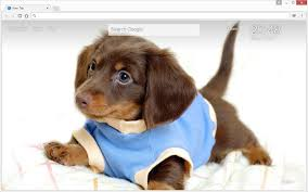 cute dogs and puppies wallpaper. Modren And Throughout Cute Dogs And Puppies Wallpaper
