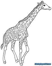 Giraffes Coloring Pages Girls Coloring Book Danaverdeme