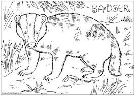 badger animal coloring pages