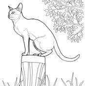 cat coloring page. Unique Page Singapura Cat On Coloring Page L