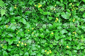 Grass and flowers background Realistic Green Leaves And Grass With Yellow Flowers Background Stock Image Istock Green Leaves And Grass With Yellow Flowers Background Stock Photo