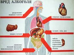 Влияние алкоголя на организм человека 100