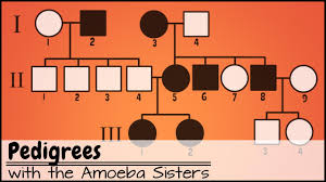 Pedigree Chart Maker Circles And Squares Pedigrees