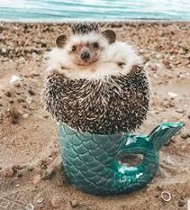 hedgehog cute spielen